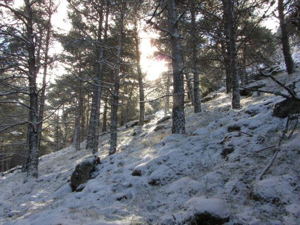Bosque (detras del refugio)